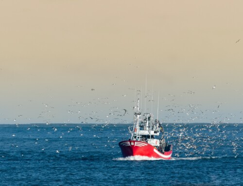 NGOs urge the European Parliament to end secrecy in how fishing rules are enforced